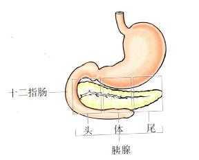 胰腺 胃肠动力检查手册 在线阅读图片